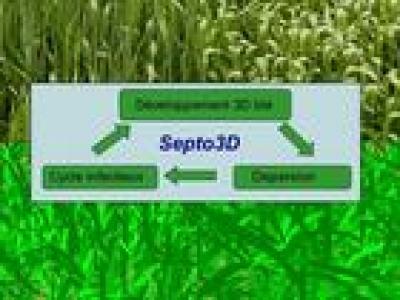 Septo3D.jpg