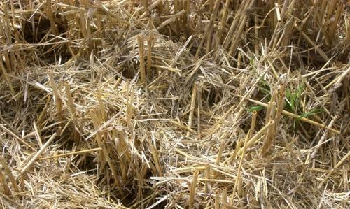 Devenir des pesticides dans les paillis en agriculture de conservation