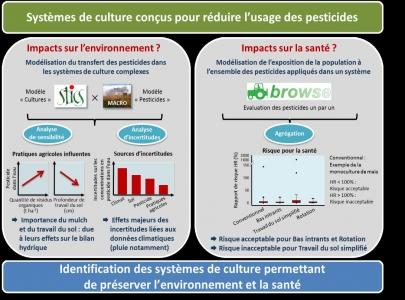 Des Systèmes de culture pour réduire l'usage des pesticides :