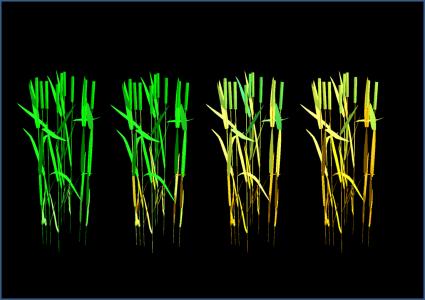CN-Wheat, un modèle pour explorer les interactions carbone –azote au sein d'une plante