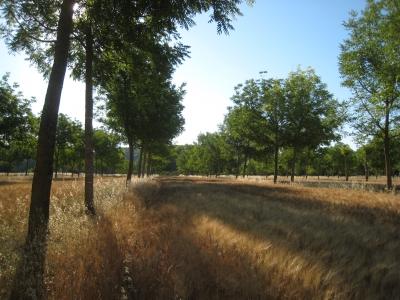 Un stockage de carbone important dans les sols en agroforesterie