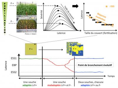Adaptation des pathogènes foliaires face à des pratiques agroécologiques dans les paysages agricoles