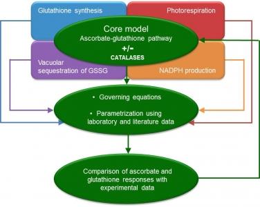 Modélisation mécaniste de la réponse métabolique des plantes au stress