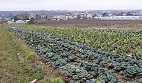 impacts écotoxicologiques et sanitaires des cyanotoxines