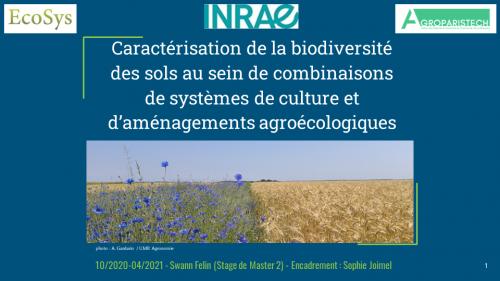Caractérisation de la biodiversité des sols au sein de combinaisons de systèmes de culture et d'aménagements agroécologiques