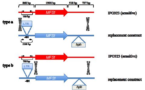 Omrane's publication in mSphere