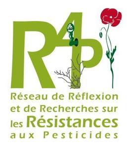 R4P-sigle