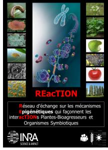 reserau REacTION