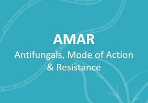 eng-AMAR