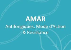 fr-AMAR