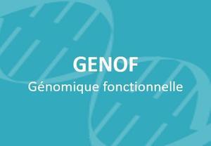 fr-Genof