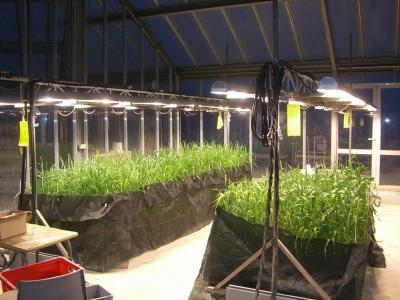 Compartiment serre éclairé 50 m² (bât. Plateau)