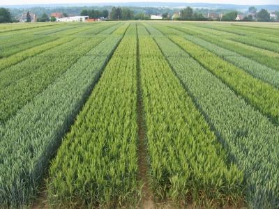 Essais agronomiques de longue durée